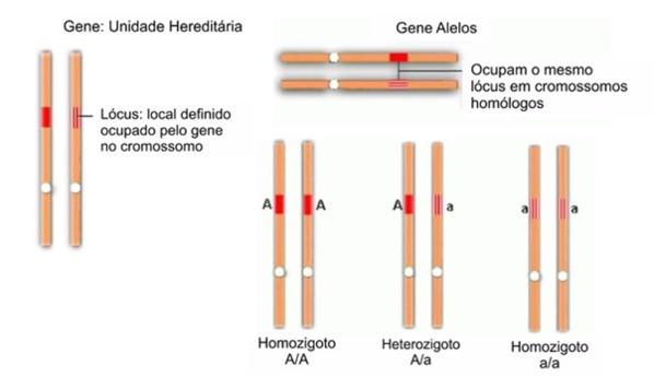 Combinação de alelos
