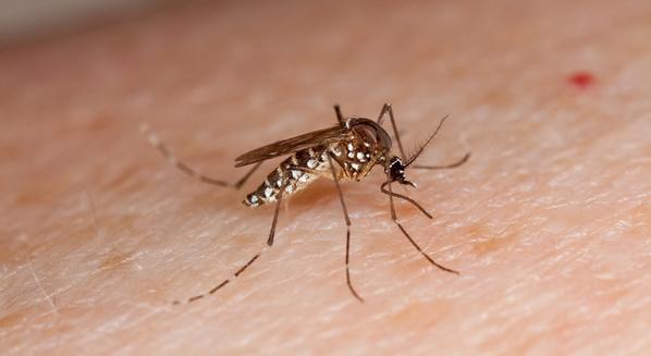Remédios para dengue