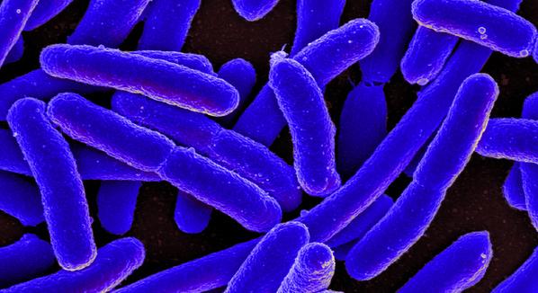 Infecção por Escherichia coli: Quais os sintomas e como tratar?