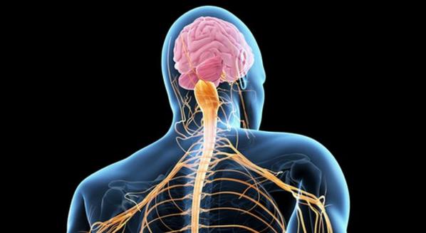 Esclerose lateral amiotrófica (ELA): Sintomas e tratamento