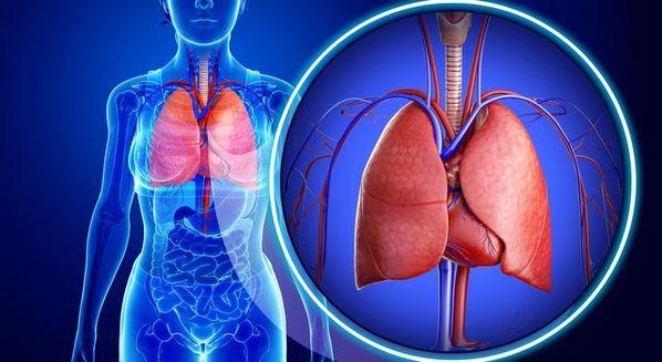 Fibrose pulmonar: causas, sintomas e tratamento