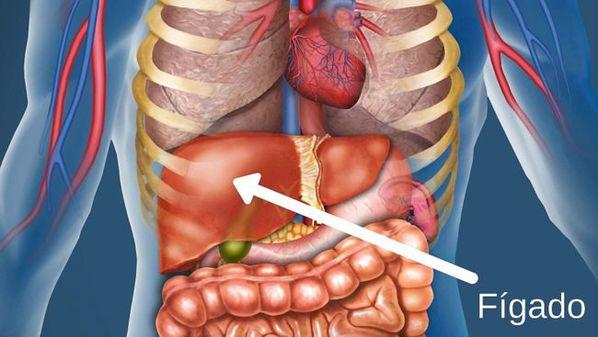 Fígado inchado: causas, sintomas e tratamento para hepatomegalia