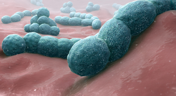 Meningite viral e bacteriana: causas, sintomas e tratamento